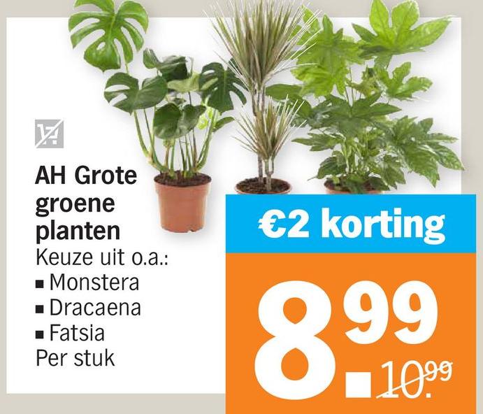 Albert Heijn planten